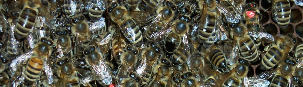 bees gathered together