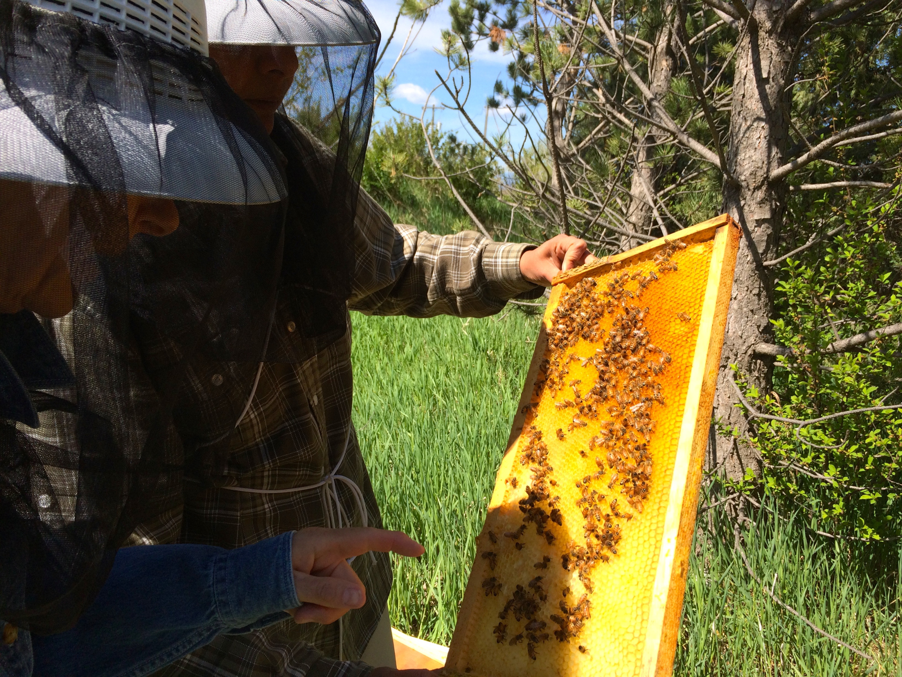 two beekeepers looking at bees